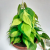 Filodendro Brasil - Philodendron hederaceum